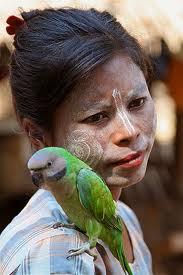 papagaj na ramenu